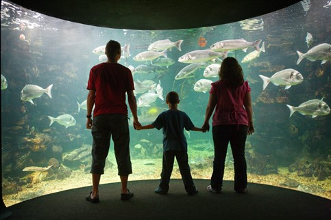 Anglesey Sea Zoo, a great family attraction